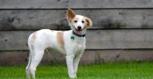 Créer une pension pour chiens ou chats : réglementation et obligations