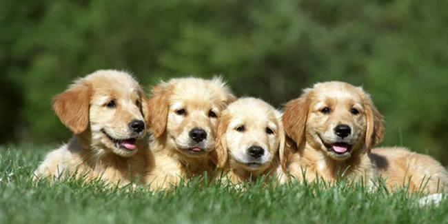 Créer un élevage de chat ou chien : formalités, réglementation, statut, conseils