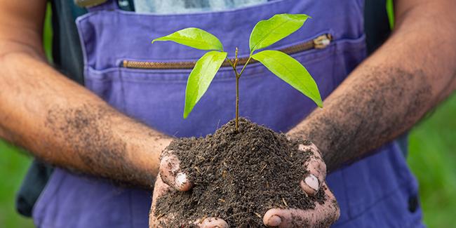 Créer une entreprise de jardinier paysagiste : quelles procédures, quelles règles ?