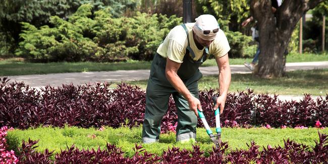 RC Pro jardinier paysagiste : comment choisir ? Quel coût ?